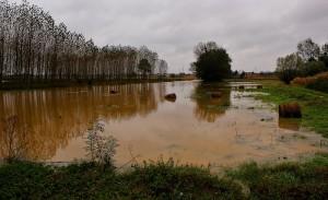 Inundación cultivo