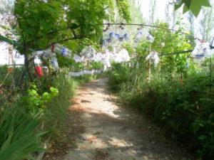 Venta Huerto La Selva con Piscina y pozo en Ejea