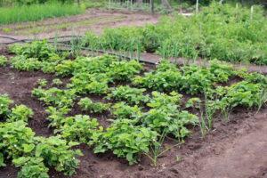 Venta huerto en Santa Anastasia Ejea Tierra para cultivo Fincas Ejea